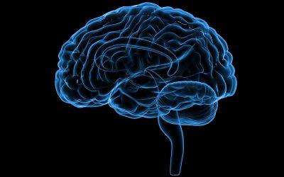 Hur hjärnforskningen kan stärka ditt ledarskap